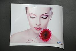 Mem Adhesiva Vinilo kun 3,2 metroj (10 futoj) ekosolila presilo WER-ES3202 4